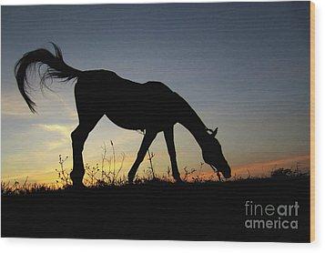 Sunset Horse Wood Print