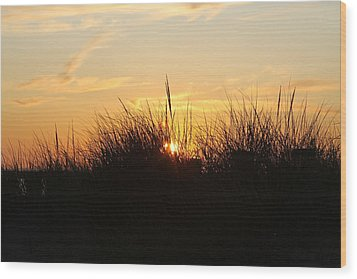 Sunset In The Grass Wood Print by Chuck Bailey
