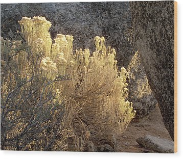 Sunset In The Rabbitbrush Lake Tahoe Sierra Nevada Larry Darnell Wood Print by Larry Darnell