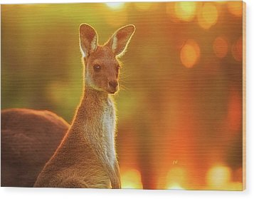 Wood Print featuring the photograph Sunset Joey, Yanchep National Park by Dave Catley