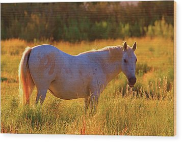 Sunset Mare Wood Print by Gus McCrea