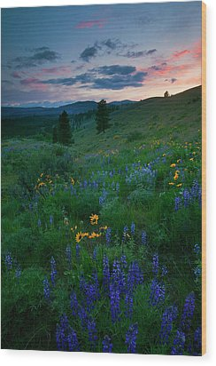 Sunset Meadow Trail Wood Print by Mike  Dawson