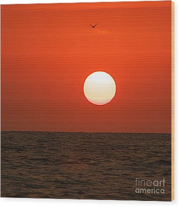 Wood Print featuring the photograph Sunset by Nicola Fiscarelli