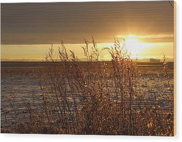 Sunset On Field Wood Print