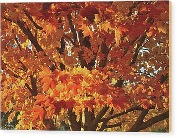 Wood Print featuring the photograph Sunset On Sugar Maple by Ray Mathis