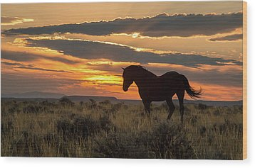 Sunset On The Mustang Wood Print