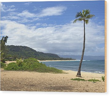 Sunset Point Palm Tree Wood Print by Paul Topp