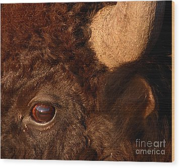 Sunset Reflections In The Eye Of A Buffalo Wood Print