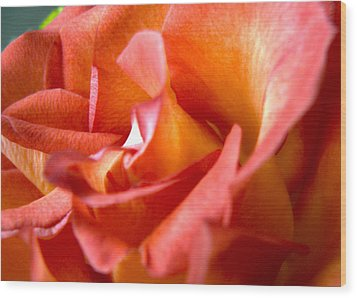 Sunset Rose One Wood Print by Abigail Markov