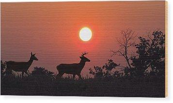 Sunset Silhouette Wood Print by David Dehner