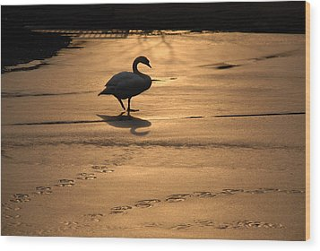 Wood Print featuring the photograph Sunset Swan by Richard Bryce and Family