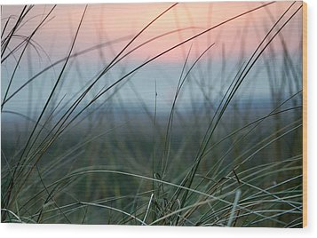 Sunset  Through The Marsh Grass Wood Print by Spikey Mouse Photography