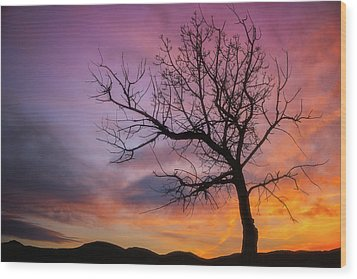Wood Print featuring the photograph Sunset Tree by Darren White