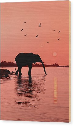 Sunset With Elephant Wood Print by Christian Heeb