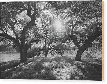 Wood Print featuring the photograph Sunshine Oaks by Alexander Kunz