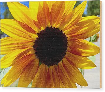 Sunshine Sunflower Wood Print by Russell Keating