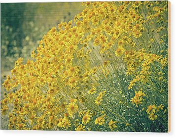 Superbloom Golden Yellow Wood Print