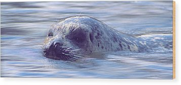 Surfacing Seal Wood Print by Greg Slocum
