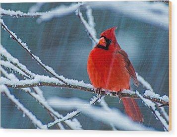 Surprise Snow Wood Print by John Harding