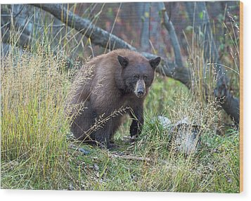 Surprised Bear Wood Print