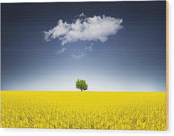 Surreal Canola Field Wood Print by Bess Hamiti