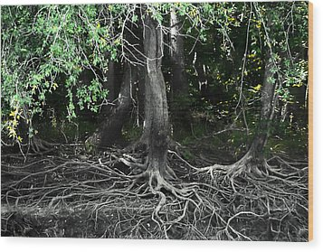 Survival Of The Fittest Wood Print by Debra Forand