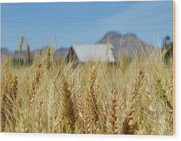 Sutter Buttes Wheat  Wood Print