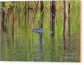 Wood Print featuring the photograph Swamp Stalker by Al Powell Photography USA