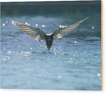 Swallow Drinks From Pool Wood Print by Bryan Allen