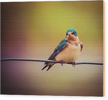 Wood Print featuring the photograph Swallow by Mary Hone