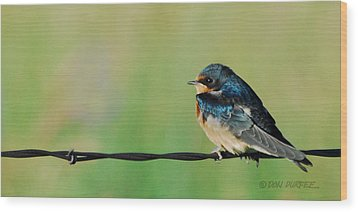 Wood Print featuring the photograph Swallow On Barbed Wire by Don Durfee