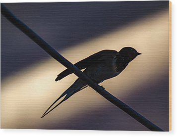 Swallow Speed Wood Print