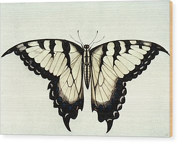Swallow-tail Butterfly Wood Print by Granger