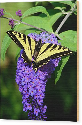 Swallow Tail Butterfly Wood Print by Lisa Rose Musselwhite