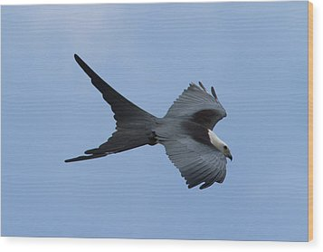Swallow-tailed Kite #1 Wood Print by Paul Rebmann