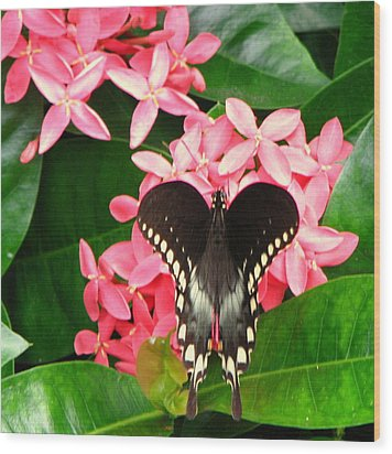 Swallow-wing Butterfly Wood Print