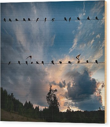 Wood Print featuring the photograph Swallows by Vladimir Kholostykh