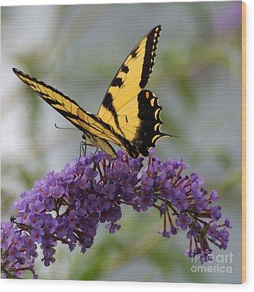 Swallowtail 2 Wood Print