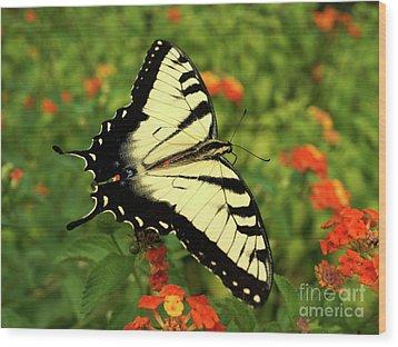 Swallowtail Among Lantana Wood Print by Sue Melvin