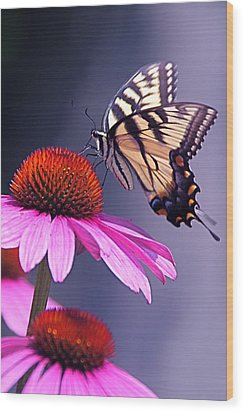 Wood Print featuring the photograph Swallowtail And Coneflower by Byron Varvarigos