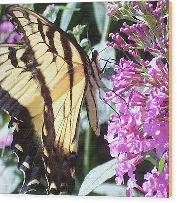 Swallowtail Wood Print by Anna Villarreal Garbis