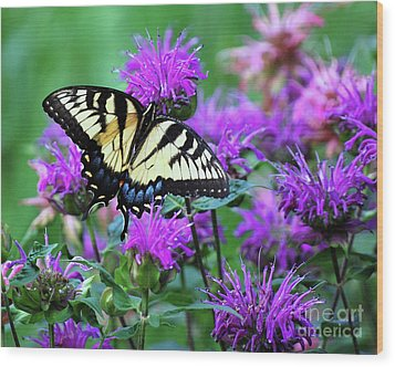 Wood Print featuring the photograph Swallowtail Butterfly by Lila Fisher-Wenzel