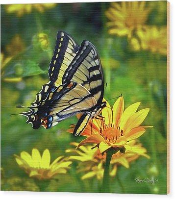 Swallowtail Dance Wood Print by Diane E Berry