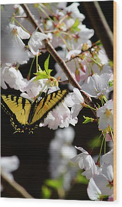 Swallowtail Wood Print by Nathan Grisham
