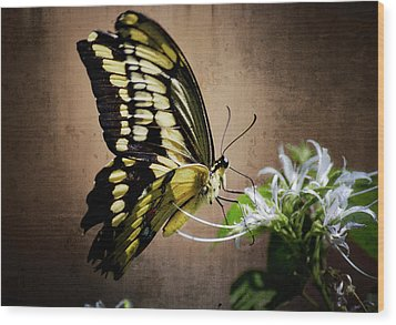Swallowtail Wood Print by Saija  Lehtonen