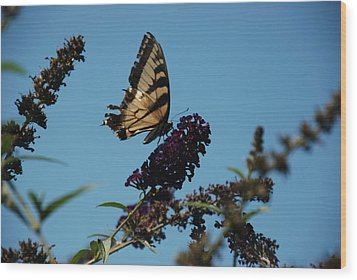 Swallowtail Wood Print by William Thomas