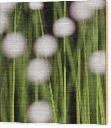 Swamp Flowers Wood Print