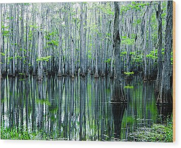 Swamp In Louisiana Wood Print