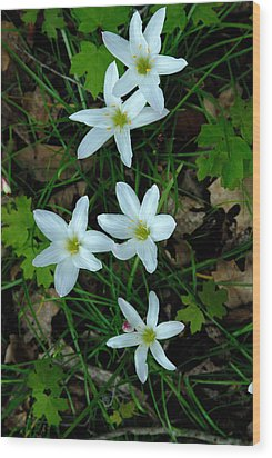 Swamp Lilies Wood Print