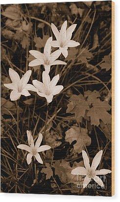 Swamp Lily Wood Print